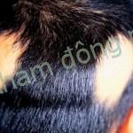 Đi tìm nguyên nhân gây rụng tóc từng vùng