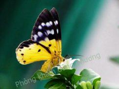 bệnh viêm da tiếp xúc côn trùng
