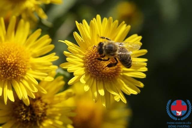 Nguyên nhân gây bệnh viêm da dị ứng tiếp xúc từ phấn hoa